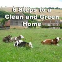 6 Steps to a Clean and Green Home